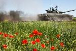 Жители Львова и Житомира готовятся встречать цветами российские танки